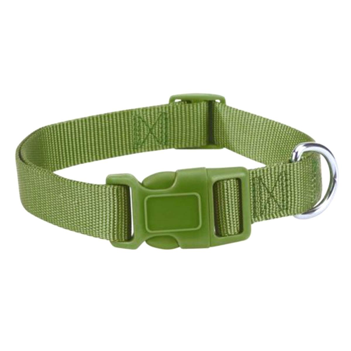 Casual Canine Nylon Dog Collar - Parrot Green