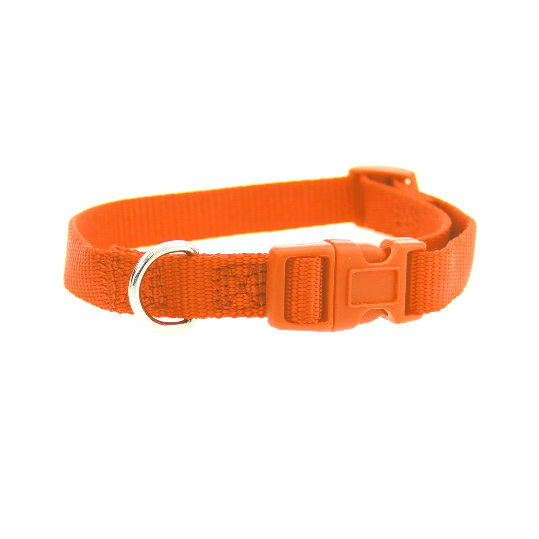 Casual Canine Nylon Dog Collar - Orange