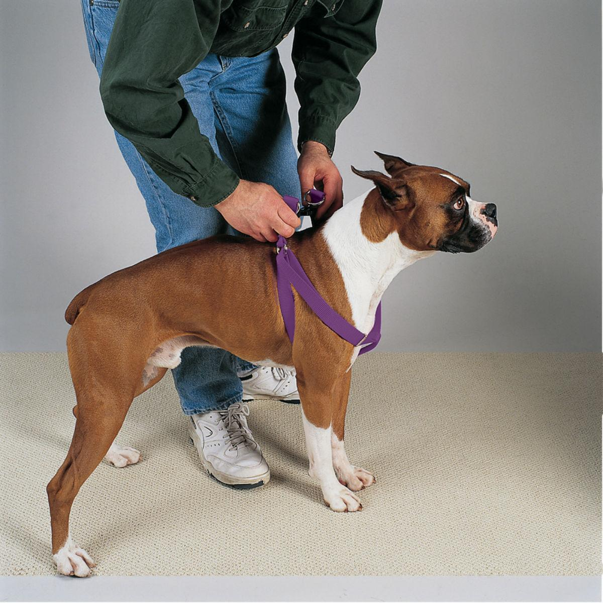 Casual Canine Two-Step Dog Harness - Sparkling Grape