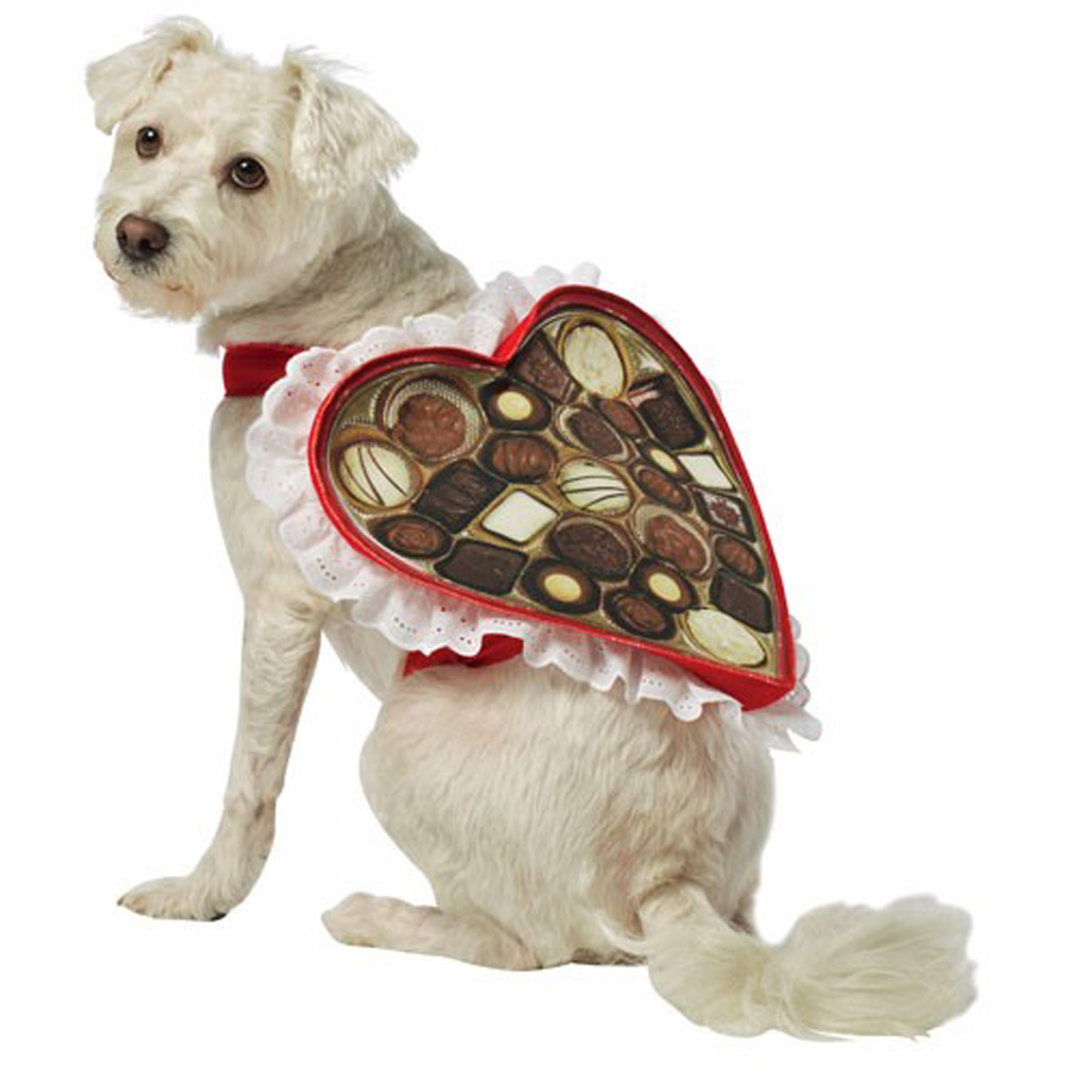 Chocolate Box Dog Costume by Rasta Imposta  sc 1 st  BaxterBoo & Chocolate Box Dog Costume by Rasta Imposta with Same Day Shipping ...