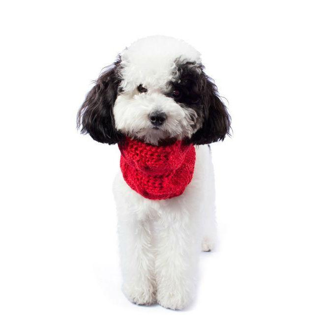 Chunky Cable Alpaca Dog Scarf by Alqo Wasi - Red