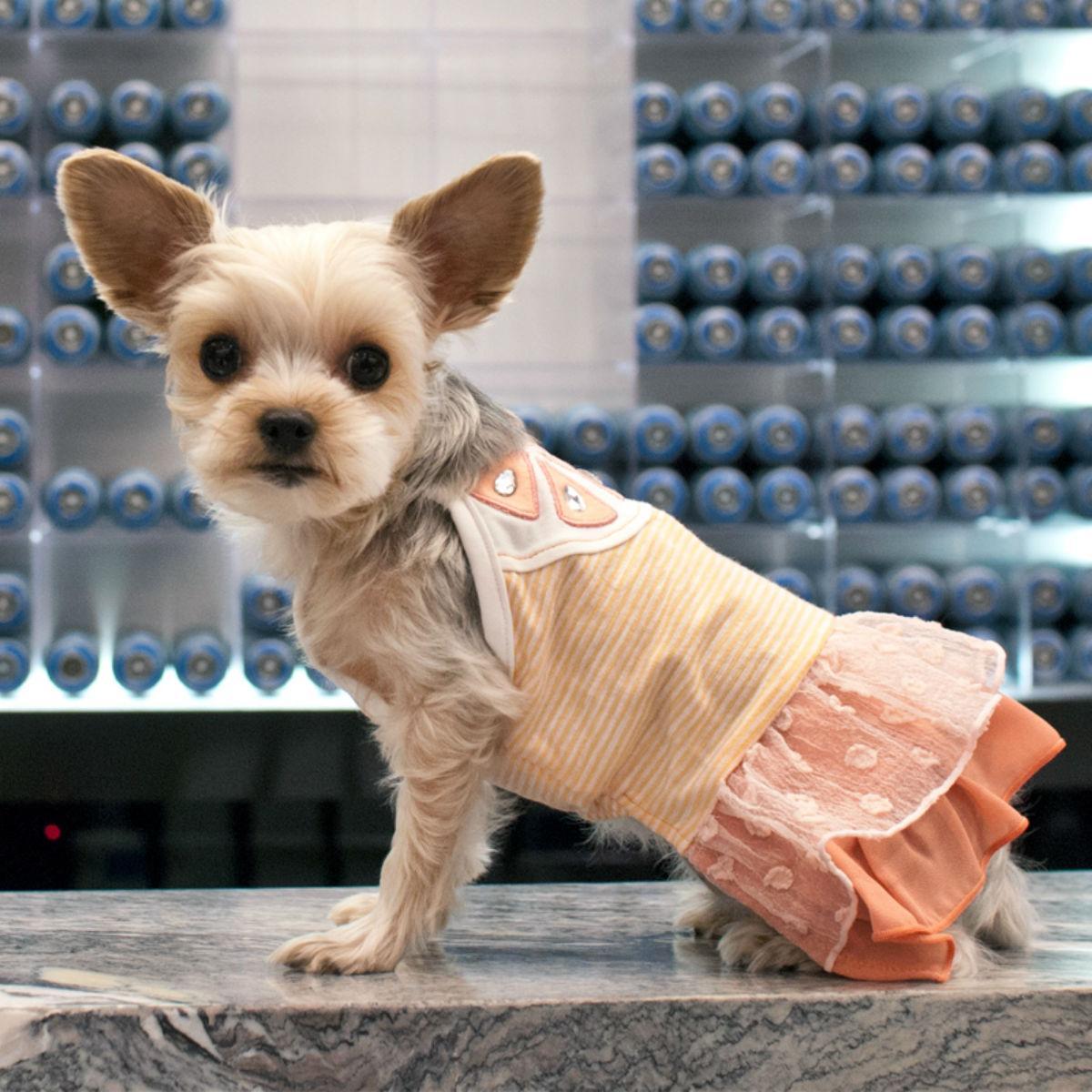 Citrus Dog Dress by Dogo
