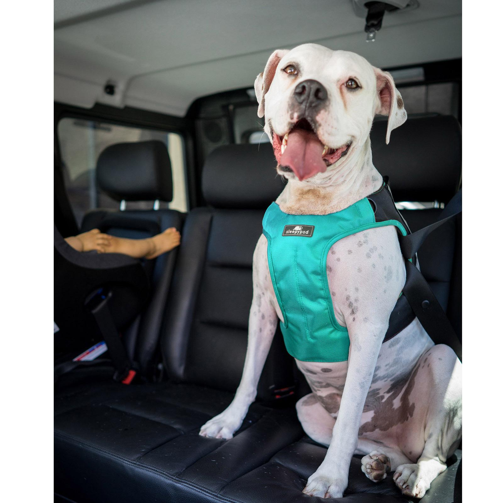 Clickit Terrain Car Safety Dog Harness By Sleepypod - Robin Egg Blue