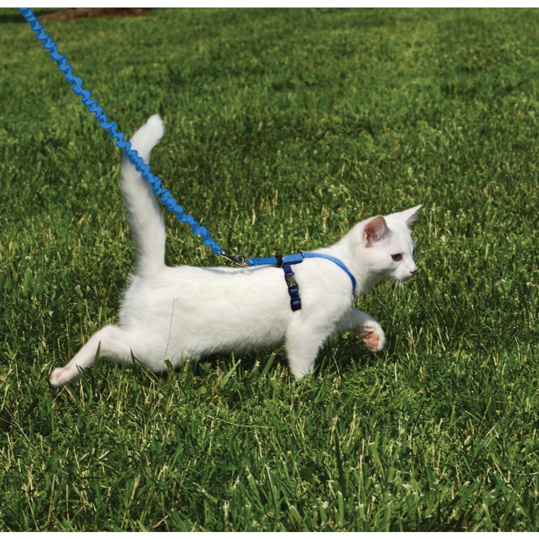 Come with Me Kitty Harness & Bungee Leash - Royal Blue