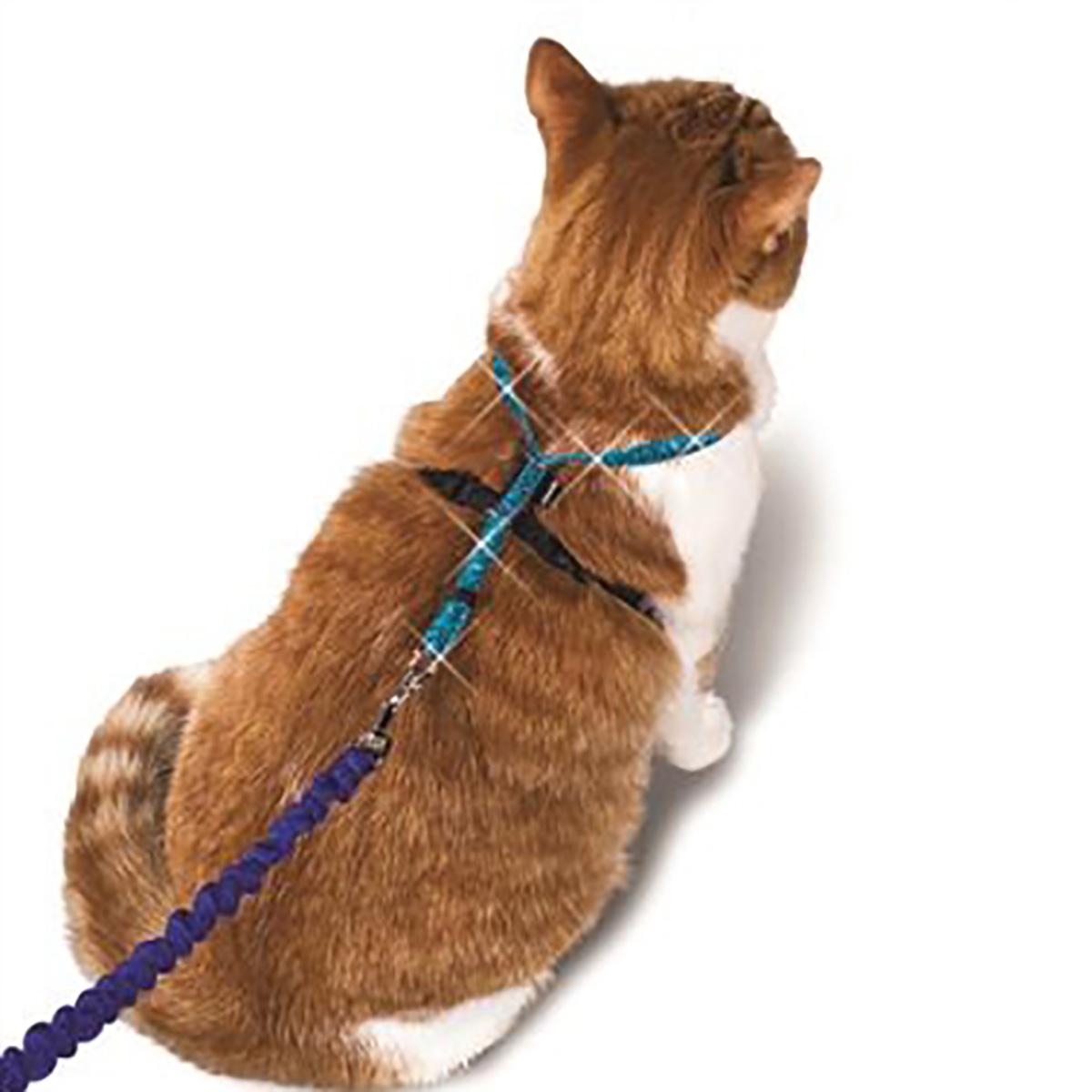cat pet product