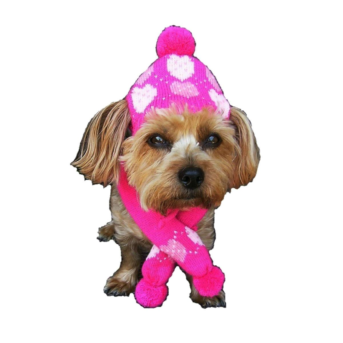 Dallas Dogs Pink Hearts Dog Hat and Scarf