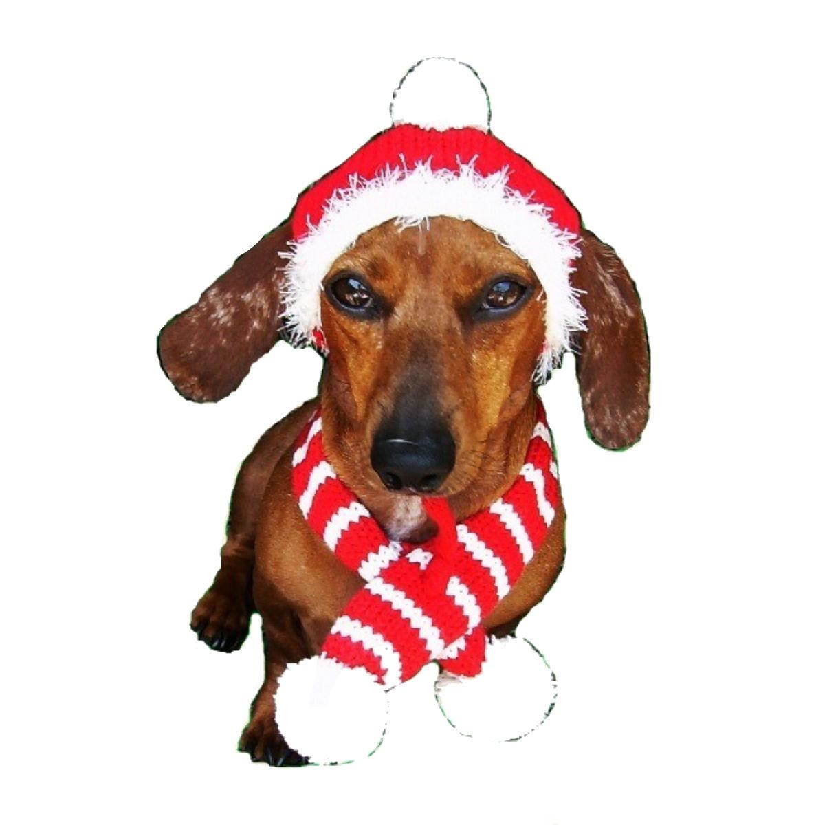 Dallas Dogs Red Holiday Dog Hat and Candy Cane Scarf
