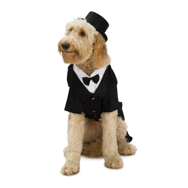 Extra Large Dog Tuxedo