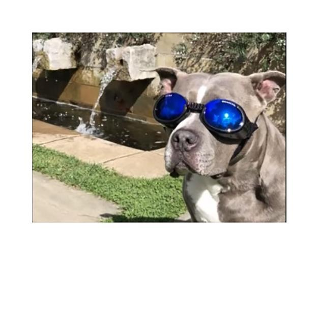 Doggles - ILS2 Shiny Black Frame with Mirror Blue Lens