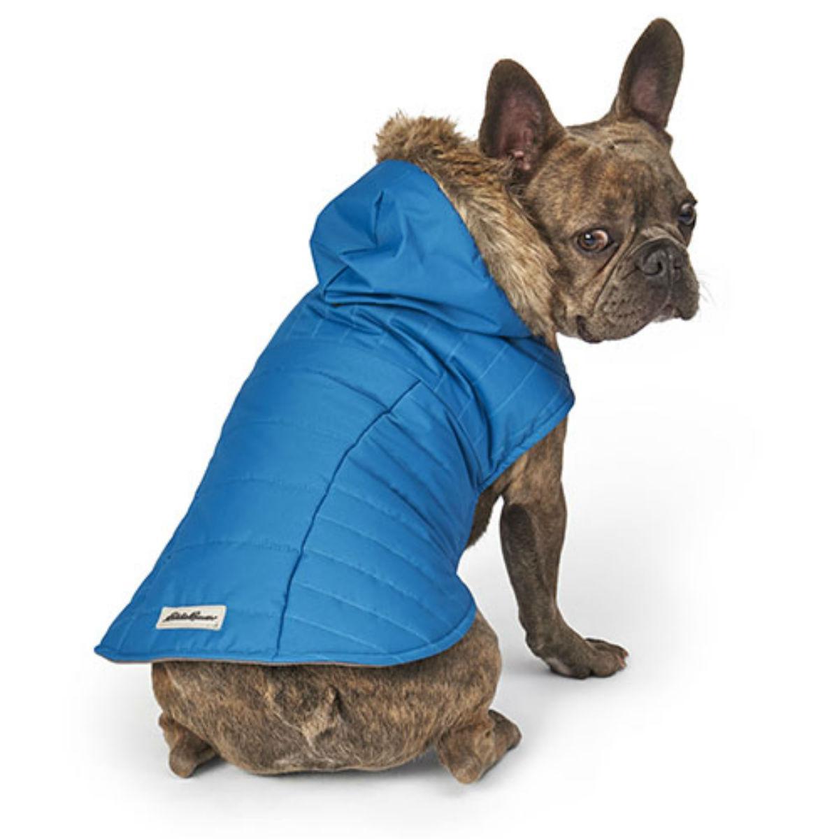 Eddie Bauer Chinook Hooded Dog Parka - Teal