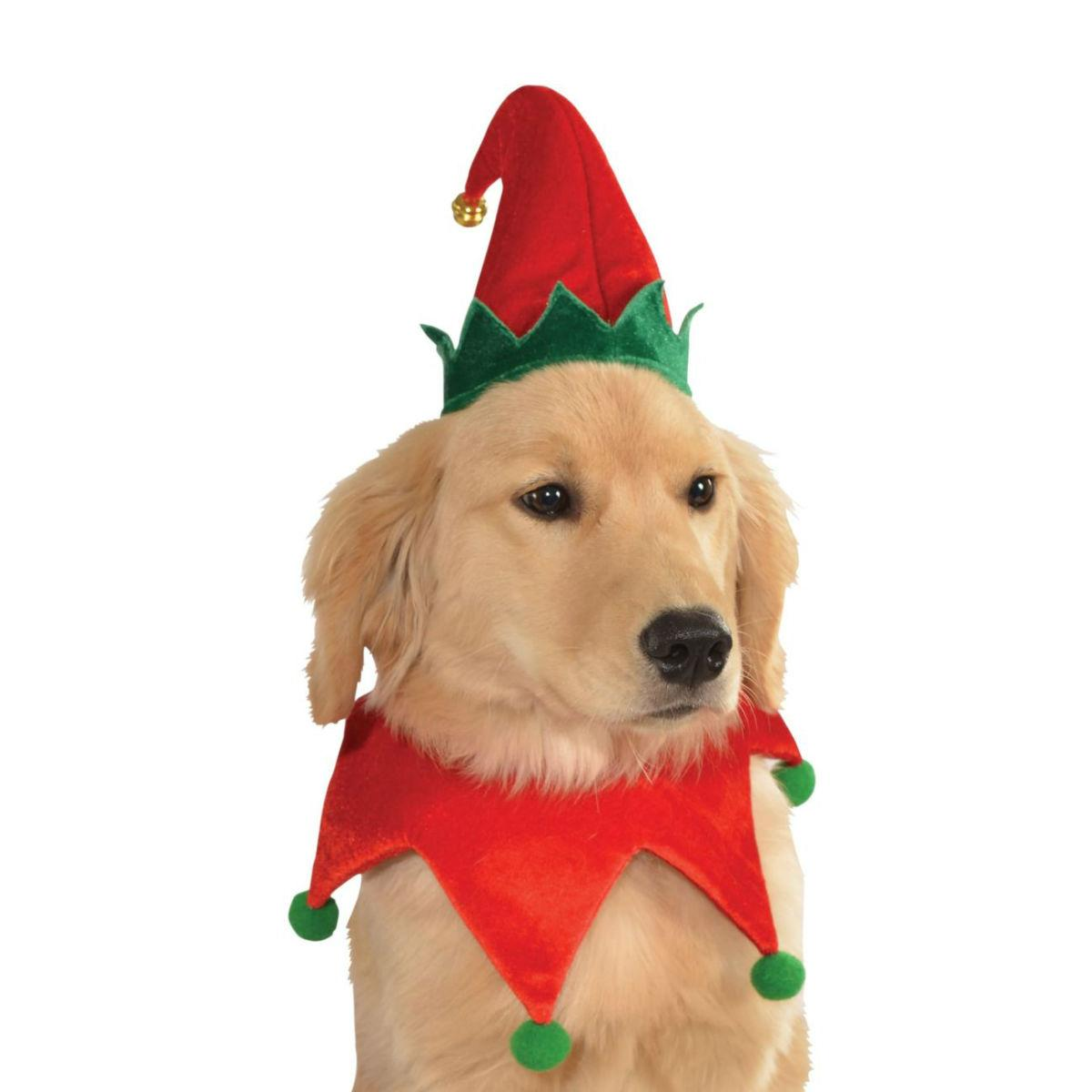 Elf Dog Hat with Bell and Collar by Rubies