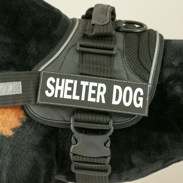 EzyDog Custom Side Patches for Convert Harness - Shelter Dog