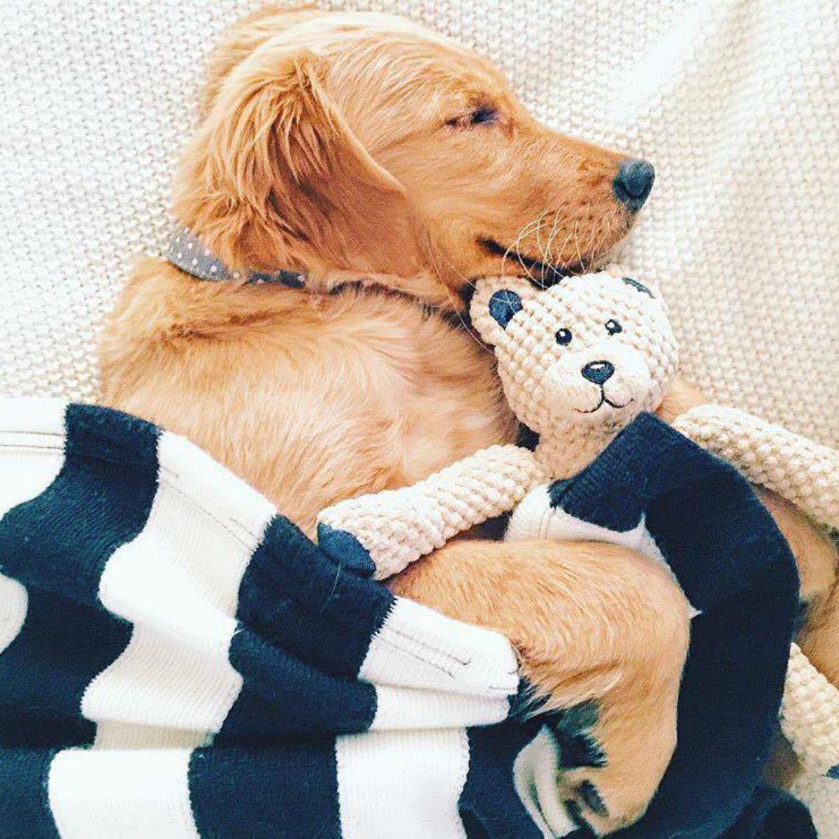 fabdog® Floppy Friends Dog Toy - Gray Teddy Bear