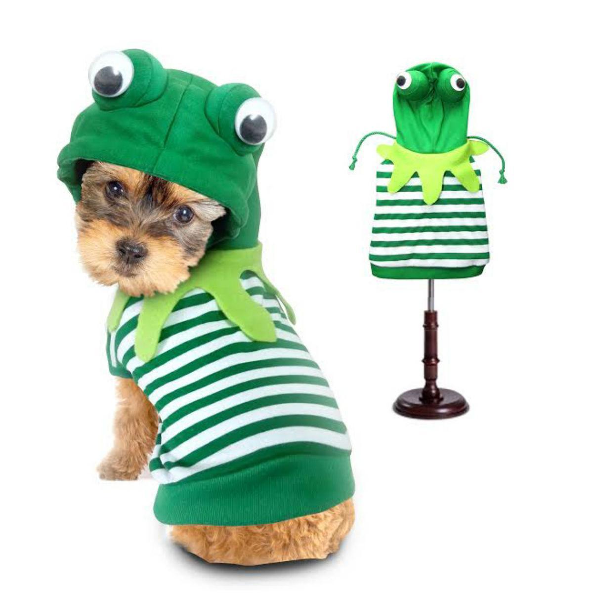 Frog Halloween Dog Costume