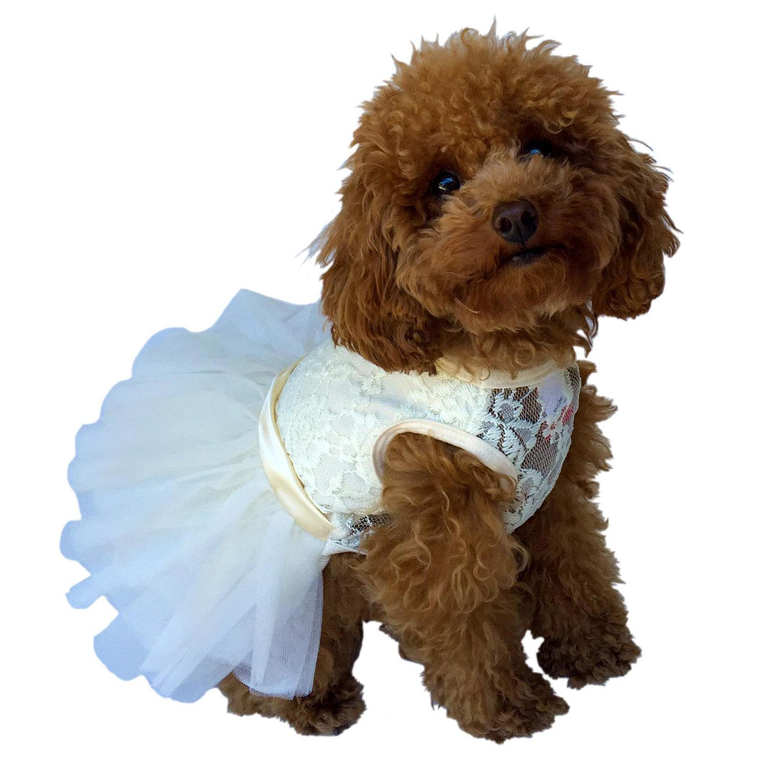 Fufu Tutu Lace Dog Dress - Ivory