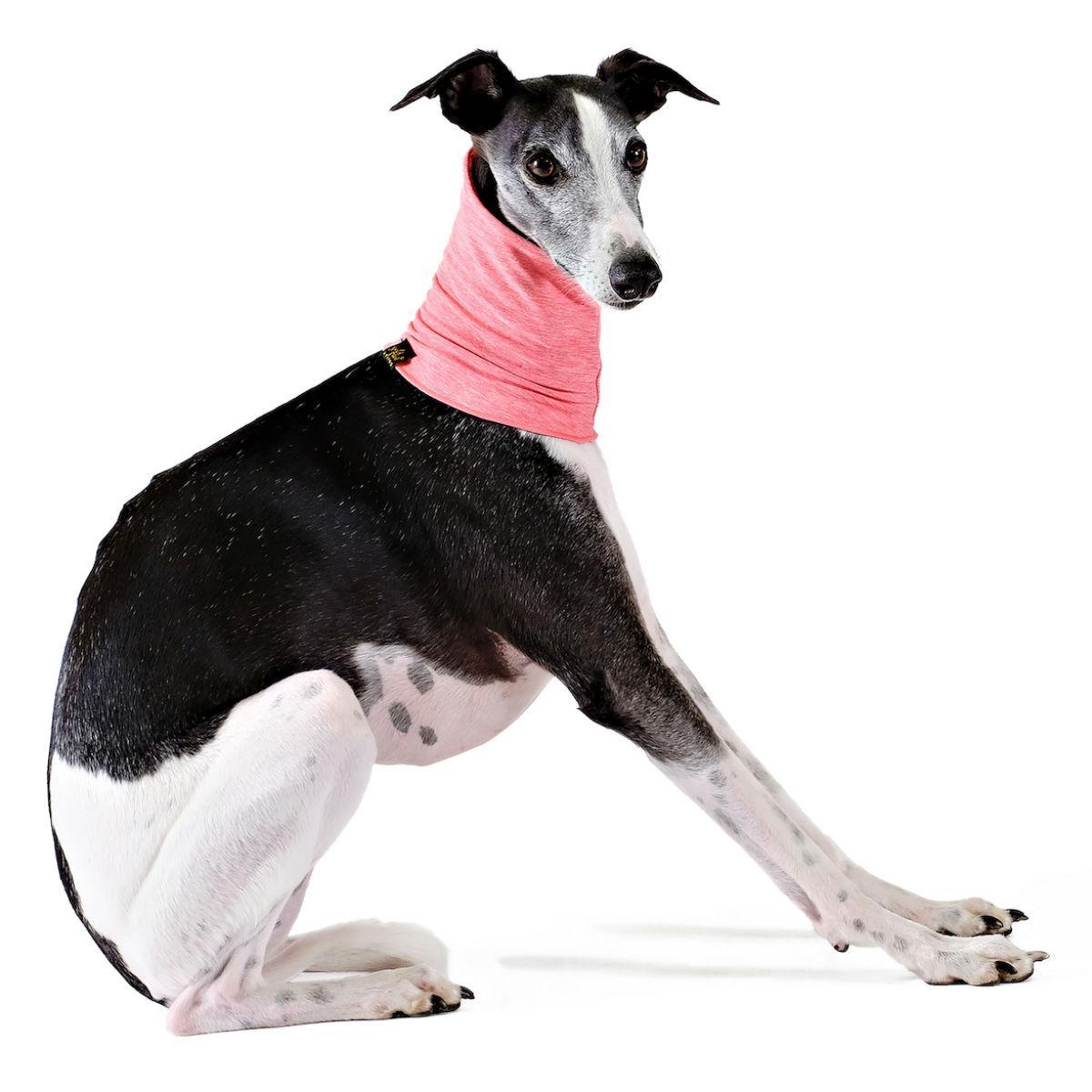 Gold Paw Sun Shield Dog Snood - Coral Pink