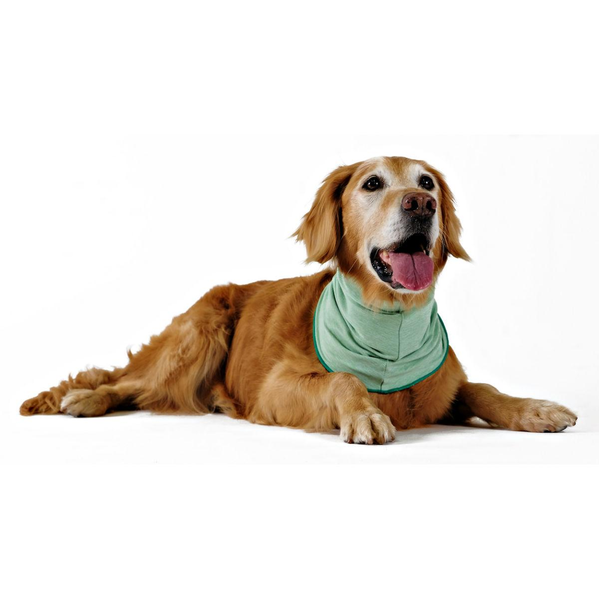 Gold Paw Sun Shield Dog Snood - Pistachio