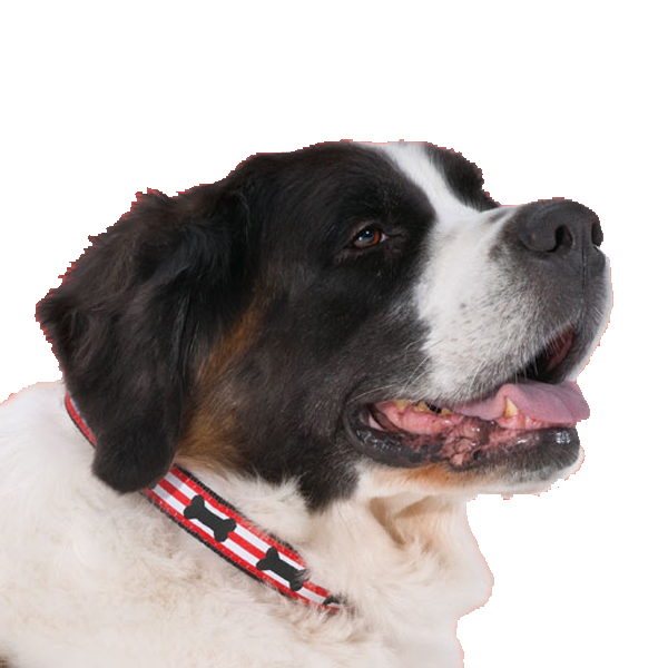 Got Bones? Dog Collar by Up Country