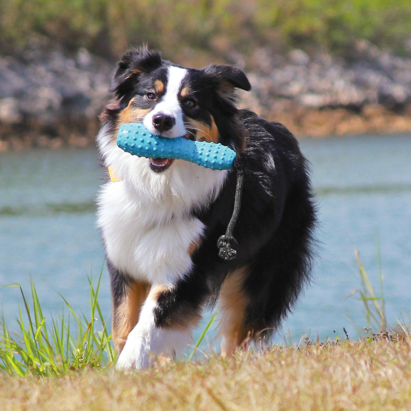 Gourdo Interactive Dog Toy by RuffWear - Metolius Blue
