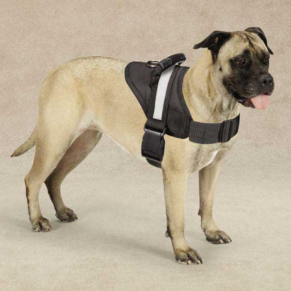 Guardian Gear Excursion Dog Harness With Same Day Shipping Baxterboorhbaxterboo: Pet Harnesses For Dogs At Elf-jo.com