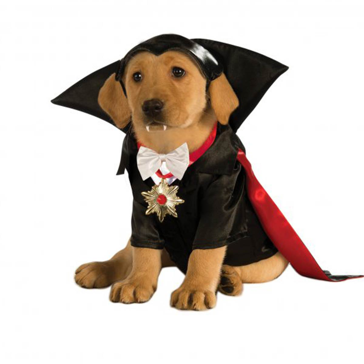 Halloween Dracula Dog Costume  sc 1 st  BaxterBoo : haloween dog costumes  - Germanpascual.Com