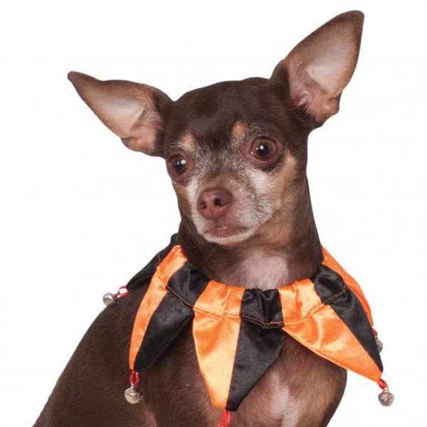 Rubie's Halloween Jester Dog and Cat Collar Scrunchie
