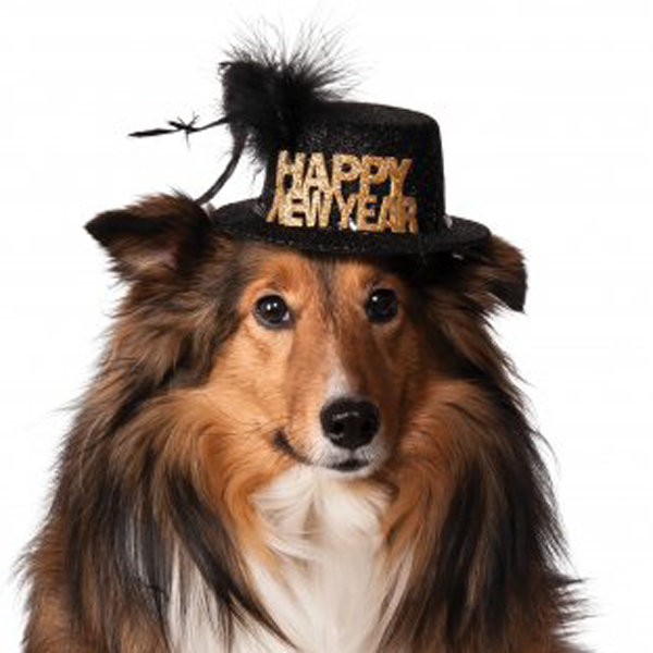 happy new year dog hat black