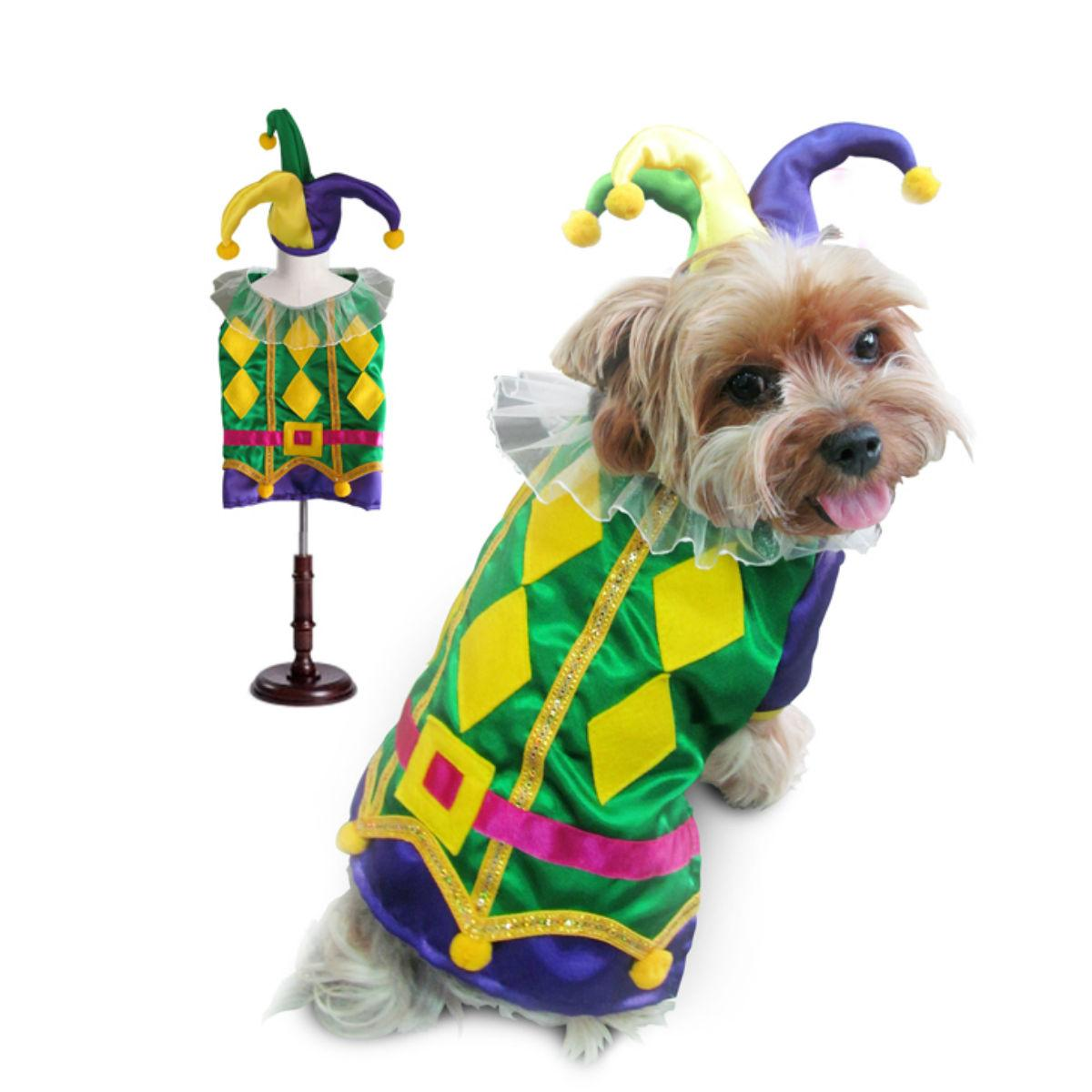 Harlequin Mardi Gras Dog Costume