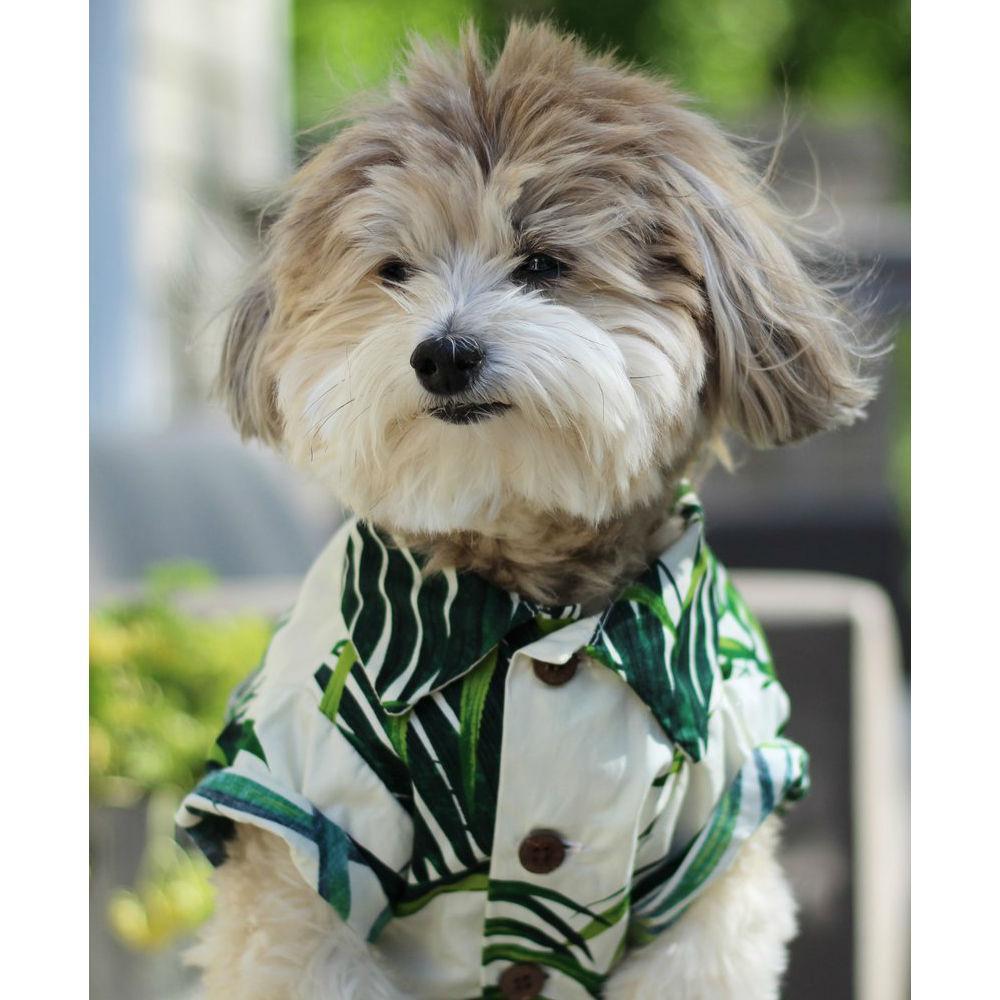 Havana Palms BBQ Dog Shirt by Dog Threads