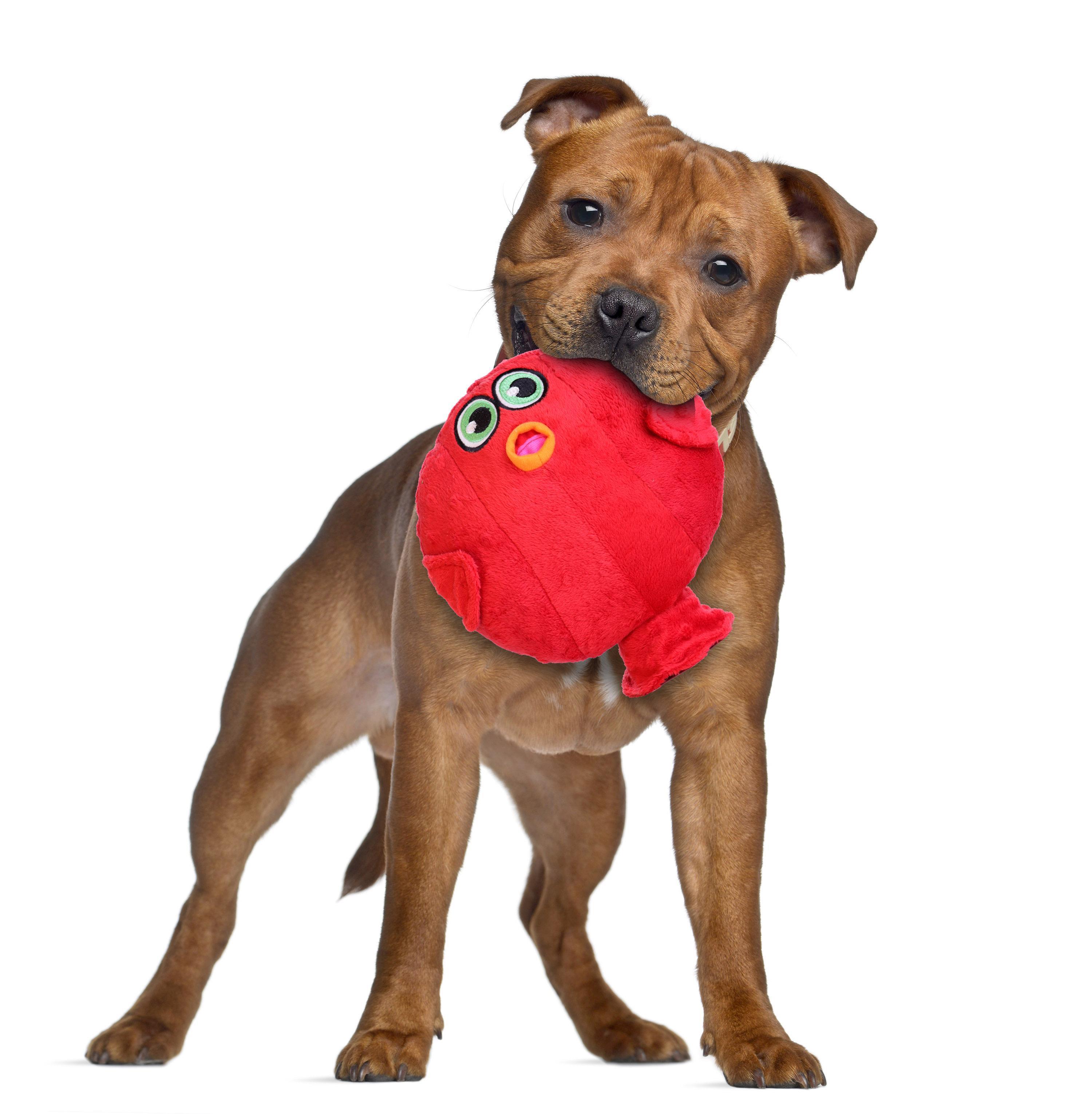 Hear Doggy Plush Dog Toy Blowfish with Same Day Shipping
