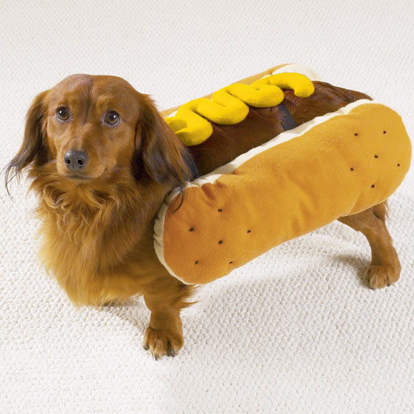 Hot Dog with Mustard Dog Halloween Costume with Same Day Shipping ...