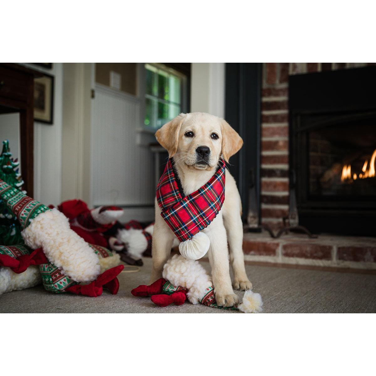 HuggleHounds Holiday Totally Tartan Dog Scarf