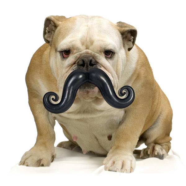 Humunga Stache Dog Toy
