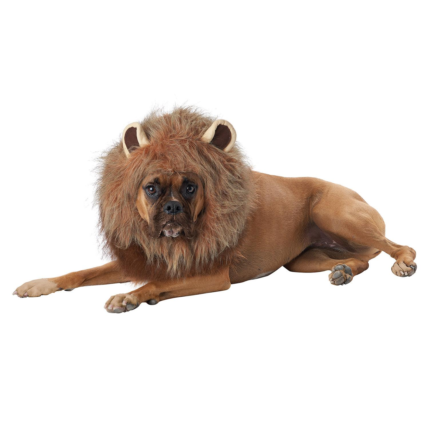 King of the Jungle Lion Halloween Dog Costume