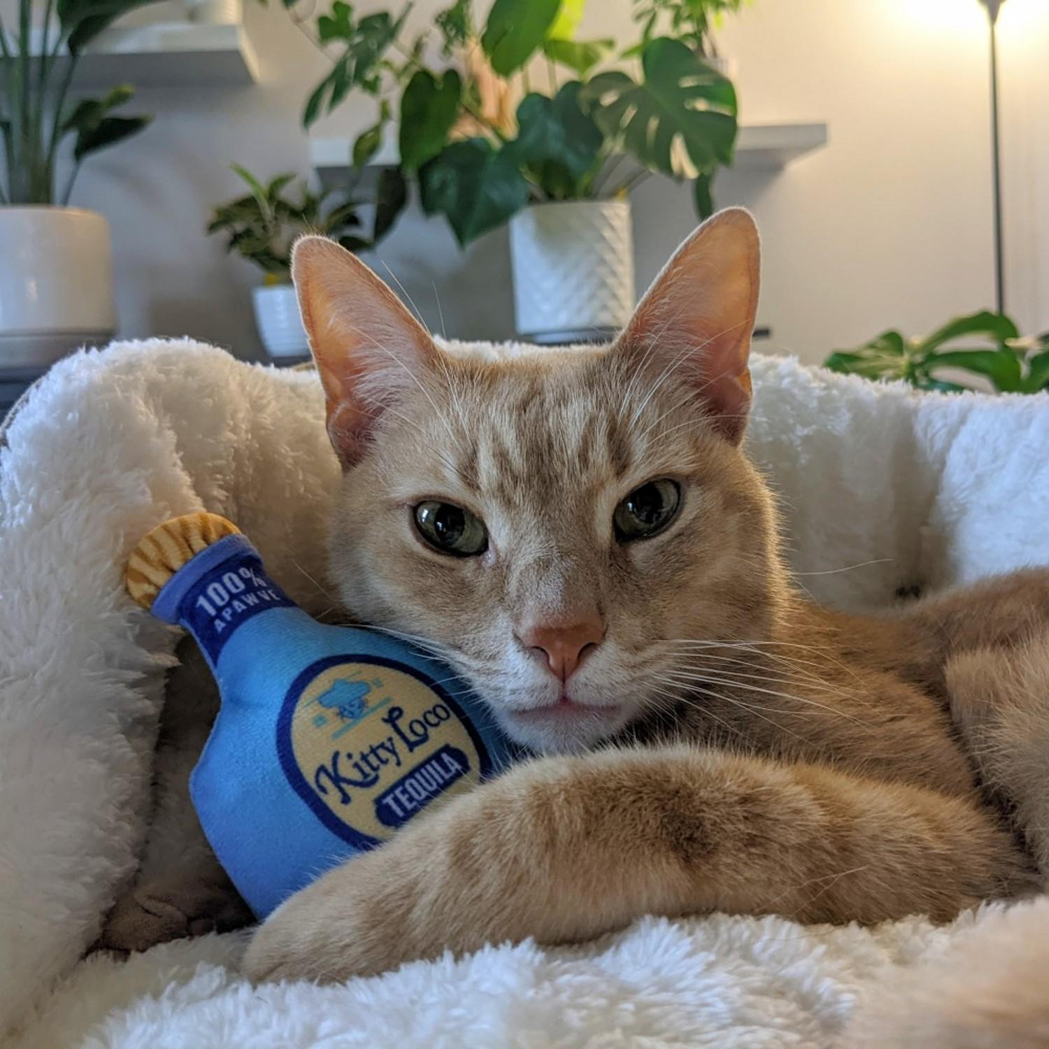 Kittybelles Toto's Pawdka Plush Booze Cat Toy