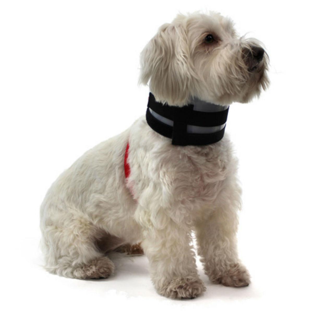 KONG Bitenot Dog Collar