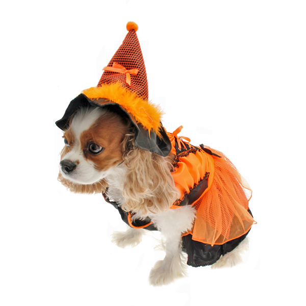 LED Witch Dog Costume - Orange and Black