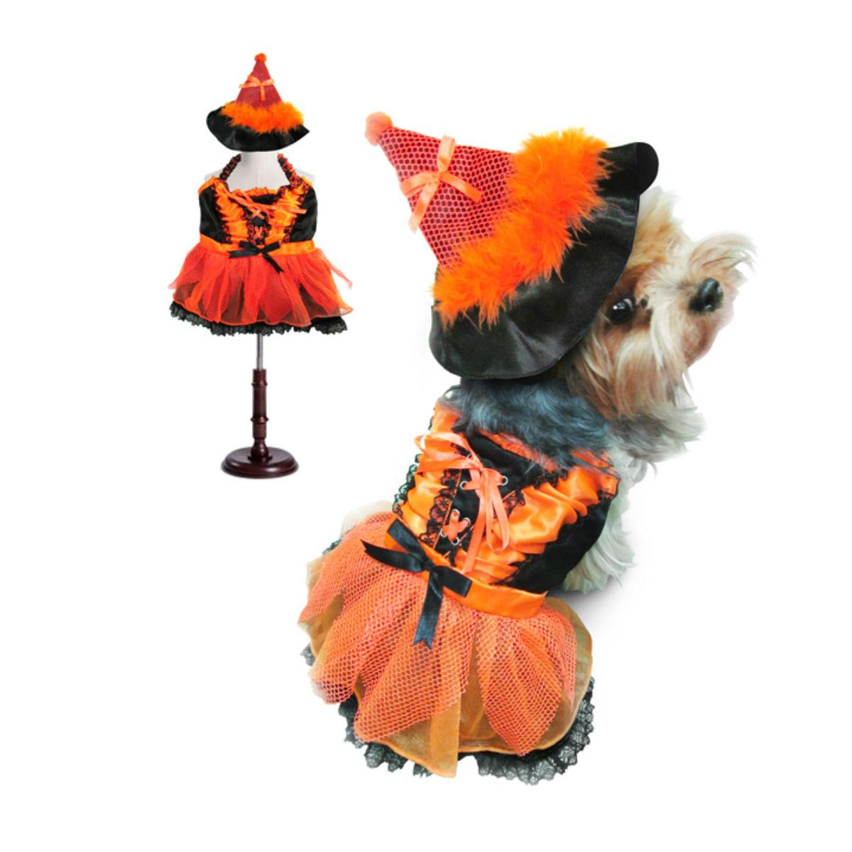 Witch Dog Halloween Costume - Orange and Black