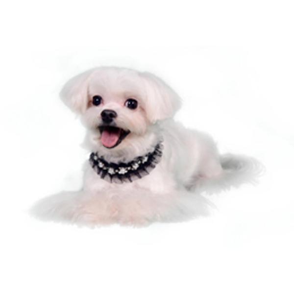 Lila Deco Dog Collar