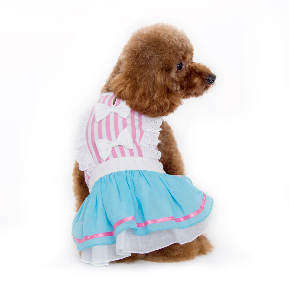 Little Alice Dog Dress by Dogo