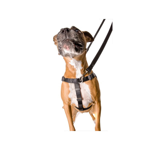 Filson Dog Harness Review