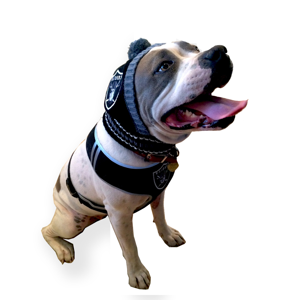Oakland Raiders Knit Dog Hat  dc7e2e538