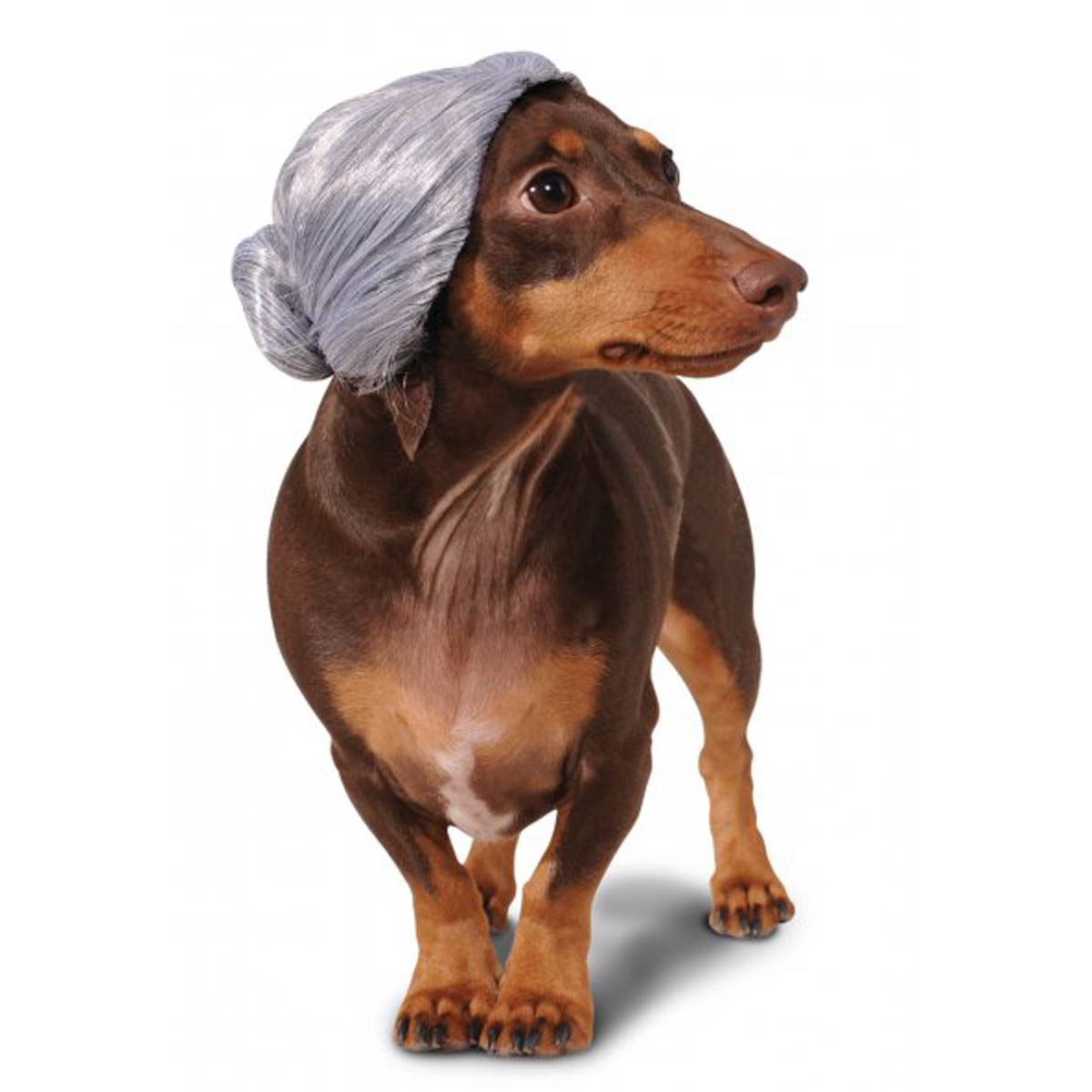 Old Lady Wig Dog Costume with Same Day Shipping | BaxterBoo