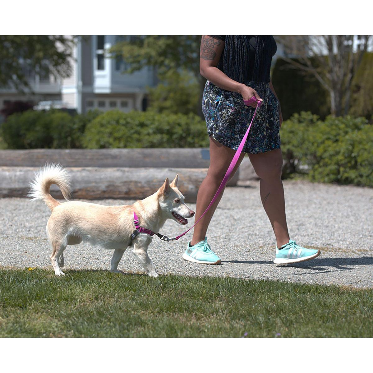 Pace No Pull Dog Harness By Rc Pets Mulberr Baxterboo