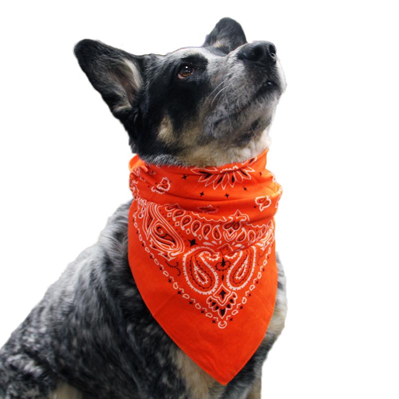 Paisley Dog Bandana - Orange
