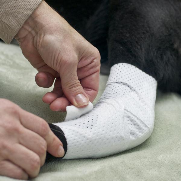 PawFlex Joint Dog Bandages