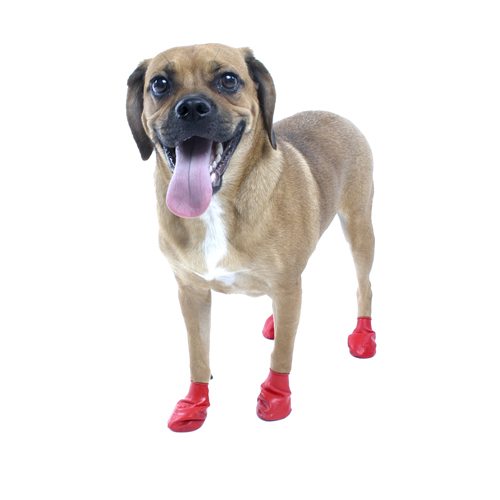 PawZ Disposable Dog Booties 12pk - Small Red  36fcb7bf5874