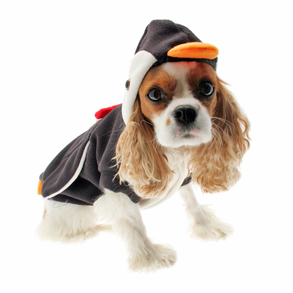 Penguin Dog Costume  sc 1 st  BaxterBoo & Penguin Dog Costume with Same Day Shipping | BaxterBoo