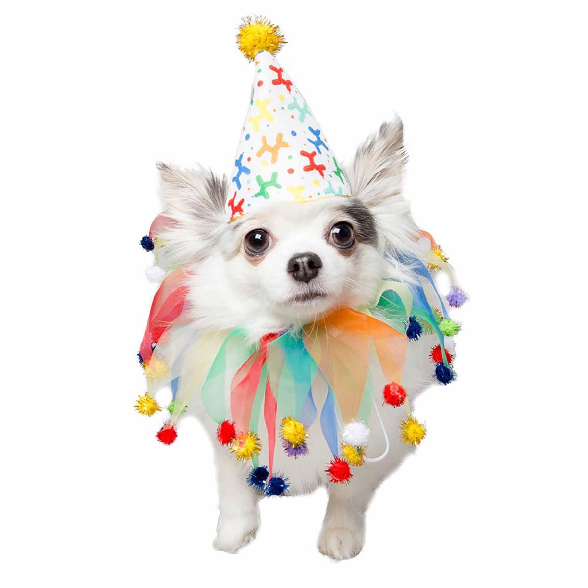 Pet Krewe Celebration Dog Hat & Collar Set