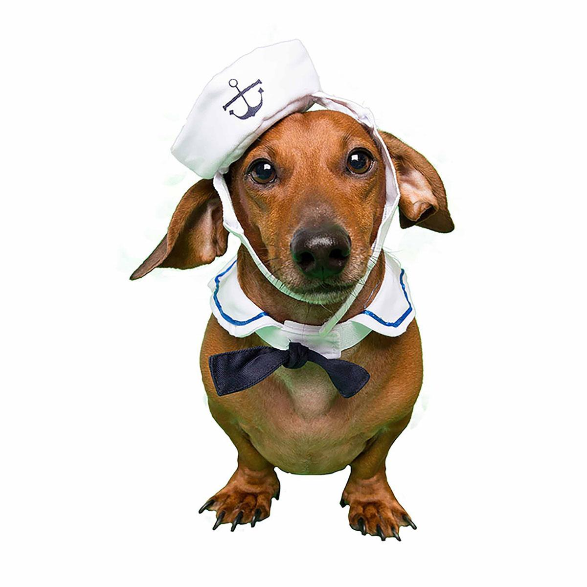 Pet Krewe Sailor Dog Costume - Small Dogs